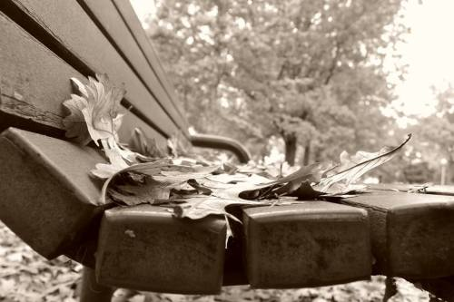 Blanketed Bench